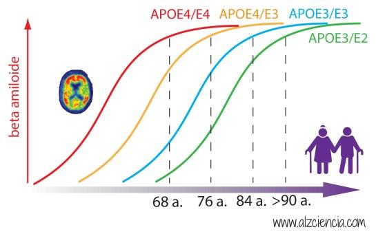 APOE figure